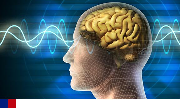 Cientistas identificam neurônios que controlam o apetite